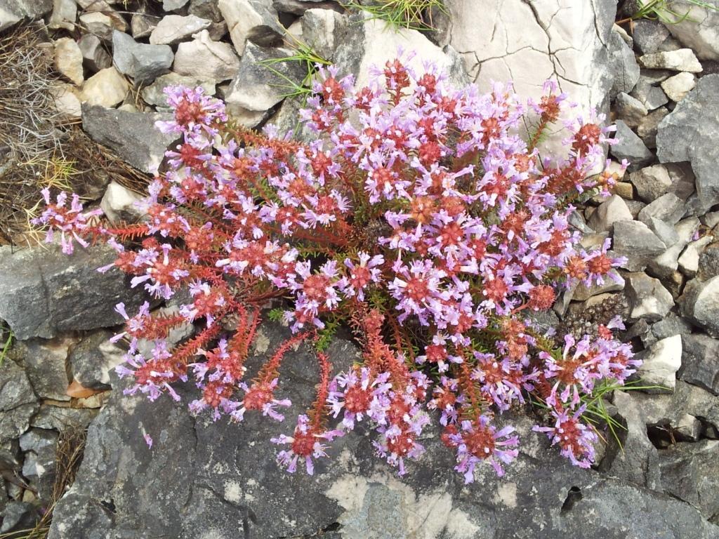 Les calanques en fleur de cassis a marseille premi re for Vers dans les plantes