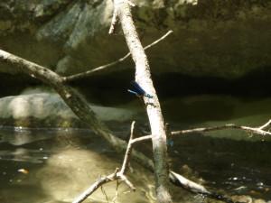 canyoning Fréjus/St raphaël, canyoning var libellule